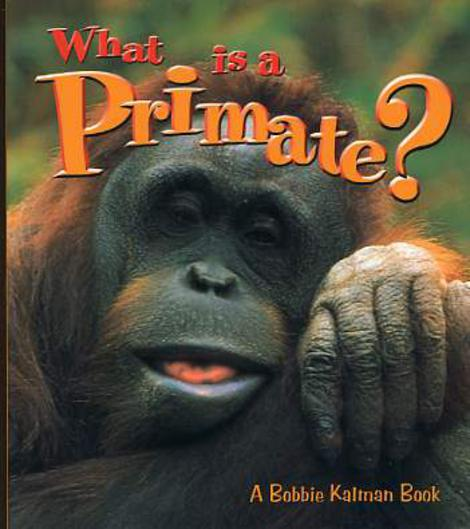 Image for What is a Primate?
