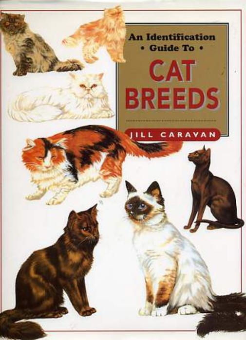 Image for An Identification Guide to Cat Breeds