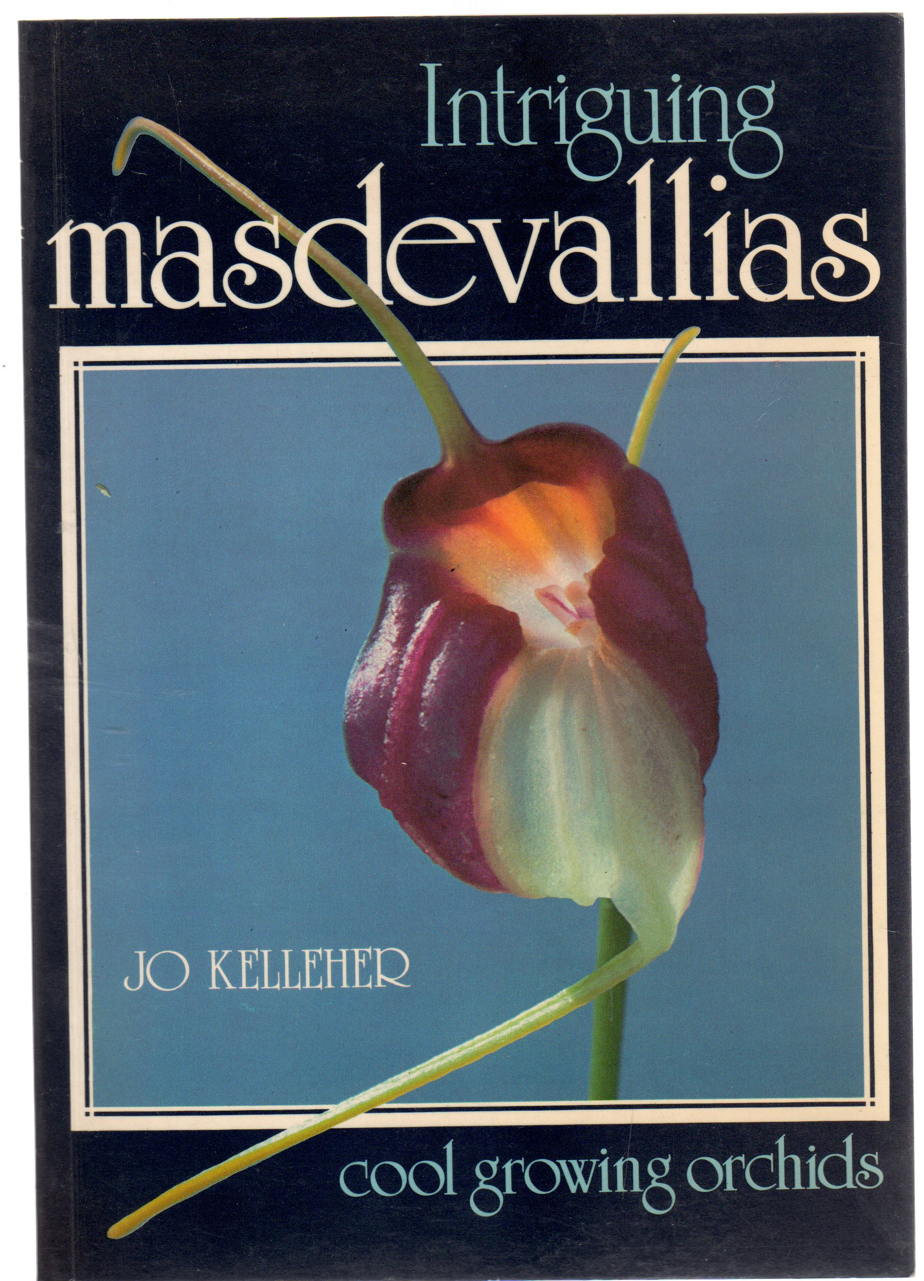 Image for Intriguing Masdevallias : cool growing Orchids