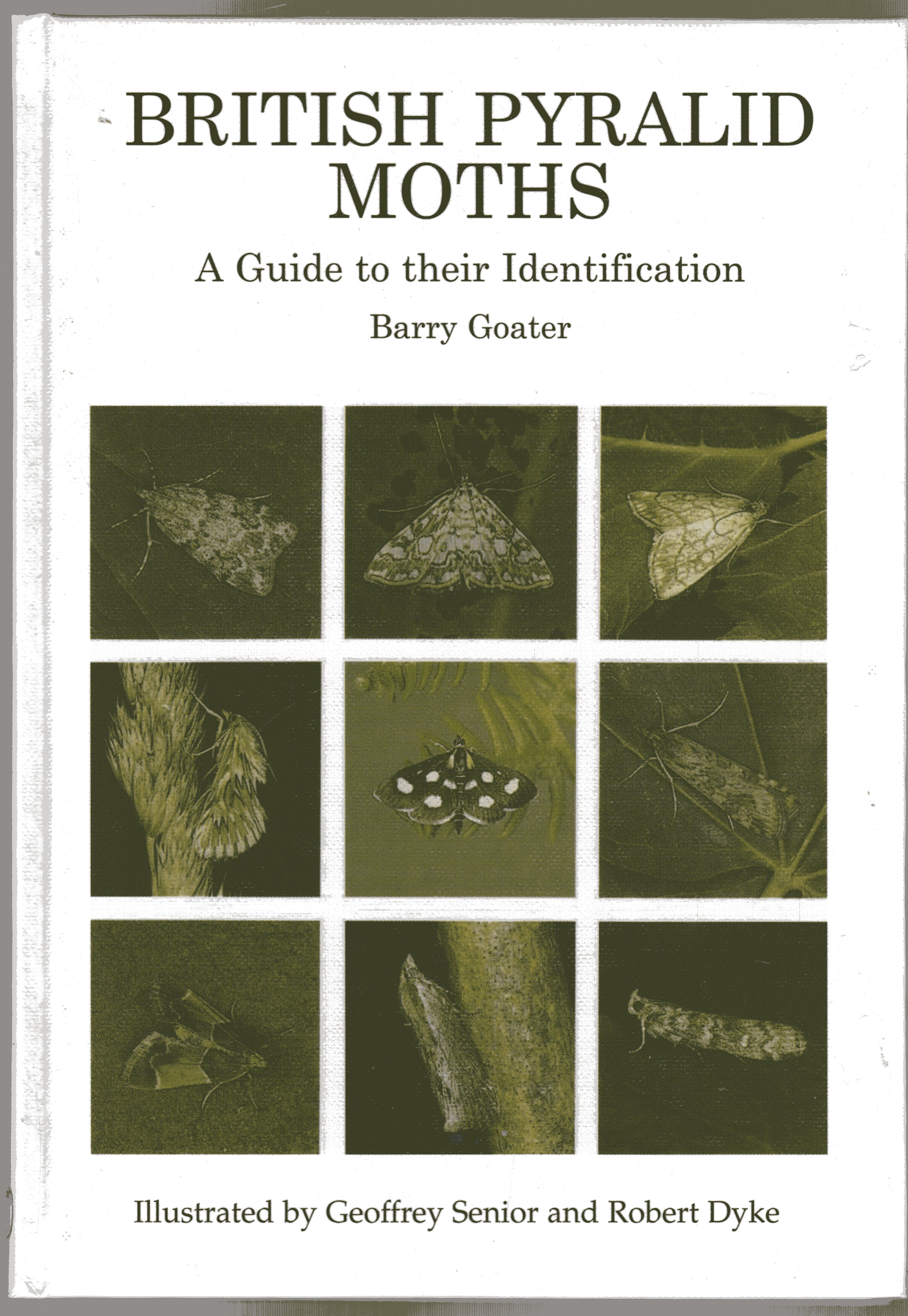 Image for British Pyralid Moths : A Guide to Their Identification
