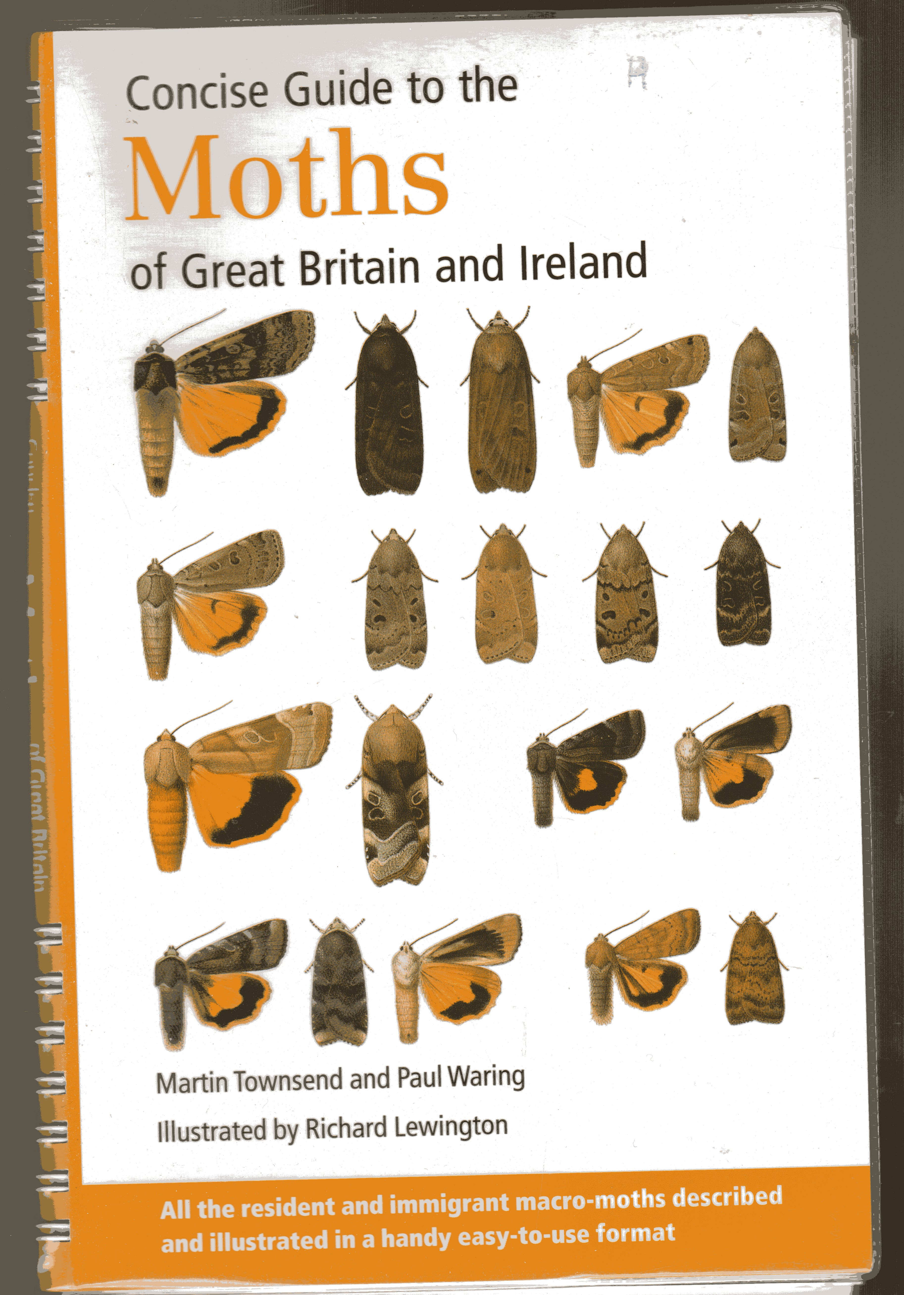 Image for Concise Guide to the Moths of Great Britain and Ireland